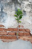 Plants On The Old Bricks