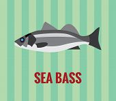 Sea bass drawing on green background.