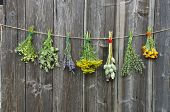 stock photo of hyssop  - medical herbs flowers bunch collection on old wooden wall