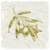 Grunge illustration - hand drawn olive branch