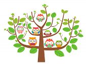 Owls and tree