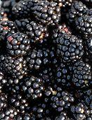 Abstract Of Arkansas Blackberries