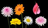 picture of wildflowers  - Collection of Various Colorful Flowers and Wildflowers with Green Stick Isolated on Black Background - JPG