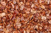 Dead Fallen Leaves Background