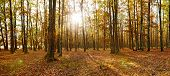 Deciduous Forest Panorama In Autumn