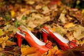 Orange shoes in otumn leaves