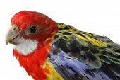 Beautiful Large Colorful Parrot