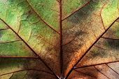 Abstract leaf texture for background