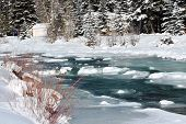 image of blanket snow  - A snow blanket over Vallecito Creek in Vallecito, CO