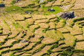 stock photo of mud-hut  - Stunning landscape and bright rice fields in the remote region of  Tana Toraja - JPG
