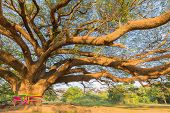 Under the Giant tree