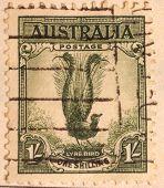 Australian Postage stamp - Lyre Bird