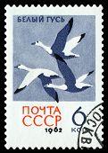 Vintage  Postage Stamp. Snow Geese.