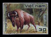 Post Stamp. Bison Bonasus