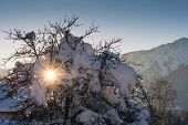 sunbeams shining through snow covered tree and alp mountains