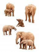 Set Of Elephants Isolated