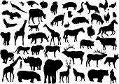 Постер, плакат: Различные животные