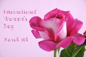 Happy International Womens Day Greeting With Pink Rose On Pink Background With Sample Text.