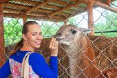 stock photo of lamas  - Young attractive woman feeding lama - JPG