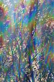 picture of prism  - Colorful light streaks through pine tree branches abstract iridescent reflections - JPG