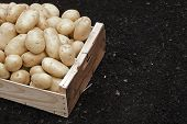 stock photo of potato-field  - Box full of potatoes in field Organic food - JPG