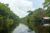 pic of rainforest  - River flows in the rainforest of Costa Rica - JPG
