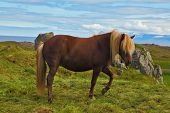 stock photo of iceland farm  - Iceland in July - JPG