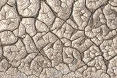 image of amoeba  - Beige abstract image of organic shapes as background - JPG