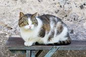 picture of domestic cat  - Cat outdoor portrait - JPG