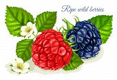 pic of blackberries  - Raspberry and blackberry with leaves and flowers - JPG