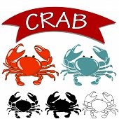 stock photo of crab  - Set of Vector Cooked crab and live crab isolated on white background - JPG