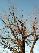 stock photo of bare-naked  - image of one naked tree at dry sunny day - JPG