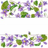 image of violet flower  - wreath of forest violet and young green grass - JPG