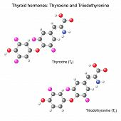 pic of hormones  - Structural chemical model of thyroid hormones - JPG