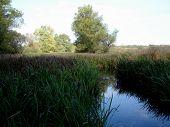 Sedge Field In The Water