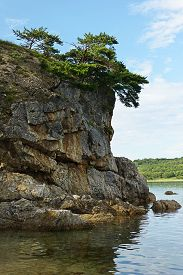 picture of pinus  - Beautiful seascape with rocks and groves of relict Pinus densiflora Siebold et Zucc - JPG