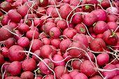 Heap Of Ripe Radish /turnips  At A Street Market In Istanbul, Turkey.