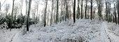 Winter in the Habichtswald mountains near Kassel