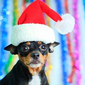 Santa hond