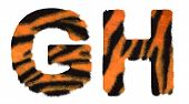 Tiger Fell G And H Letters Isolated