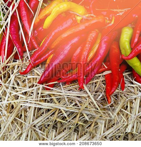 poster of Heap Of Ripe Big Red Peppers At A Street Market, Ripe Red, Green Chili, Autumn Harvest