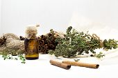Bright Dried Medicinal Herbs For Cosmetic And Healthcare Use. Apothecary Aroma Dropper Bottles. Natu poster