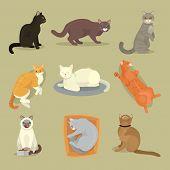mammal poster