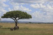 Elephant'S In The Serengeti
