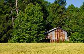 stock photo of tobacco barn  - An old tobacco barn on a farm - JPG