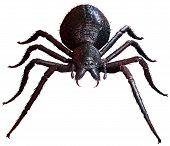 Hairy Giant Spider Top View 3d Illustration poster