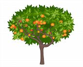 Mandarin tree