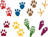 Eight Sets Of Animal Tracks