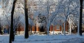 Harvard University Campus Winter Scene
