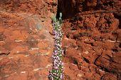Desert Spring Superstition Mountains